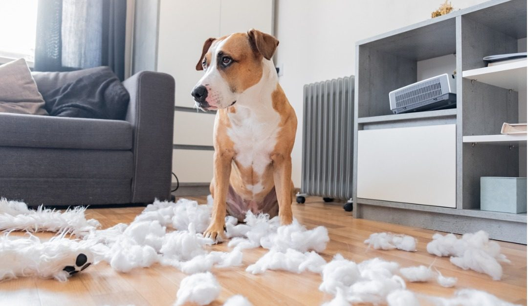 How to Repair Pet Damage Before Moving