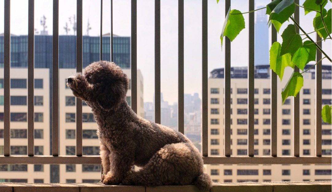 Things to Think About Before You Welcome a Pet Into Your City Home