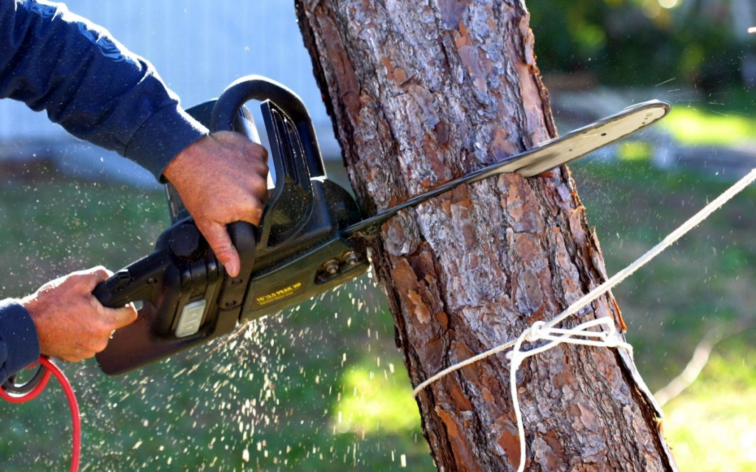 3 Tips for Removing Dead Trees From Your Property