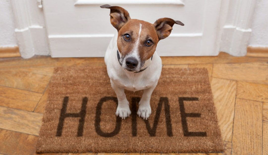 How to Sell a Home Where Pets Live