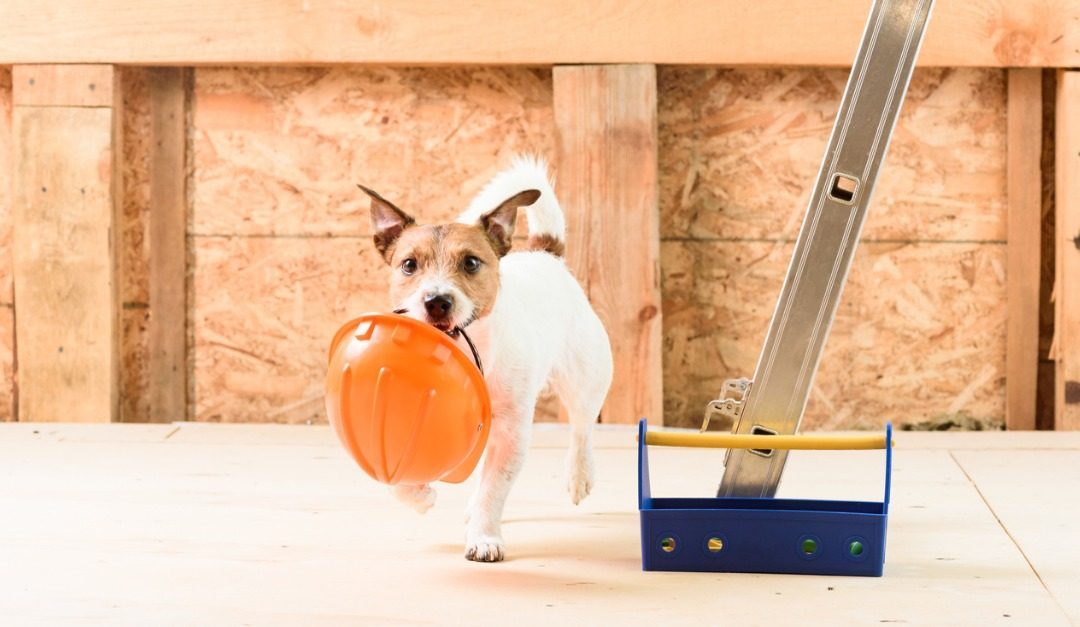 Keeping Your Pets Safe During a Remodel