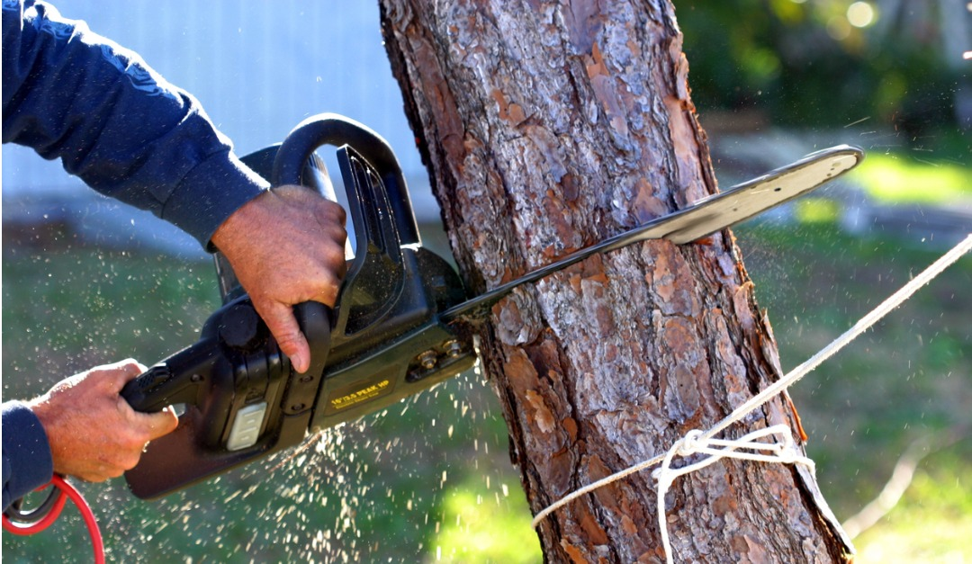 Some Tips for DIY Tree Removal