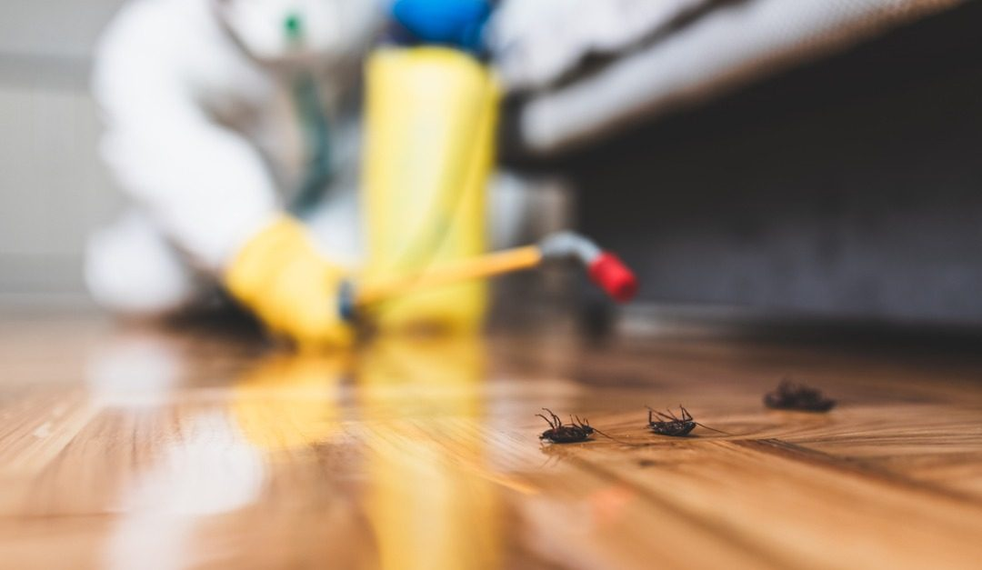 Why You Should Have Your House Inspected for Pests