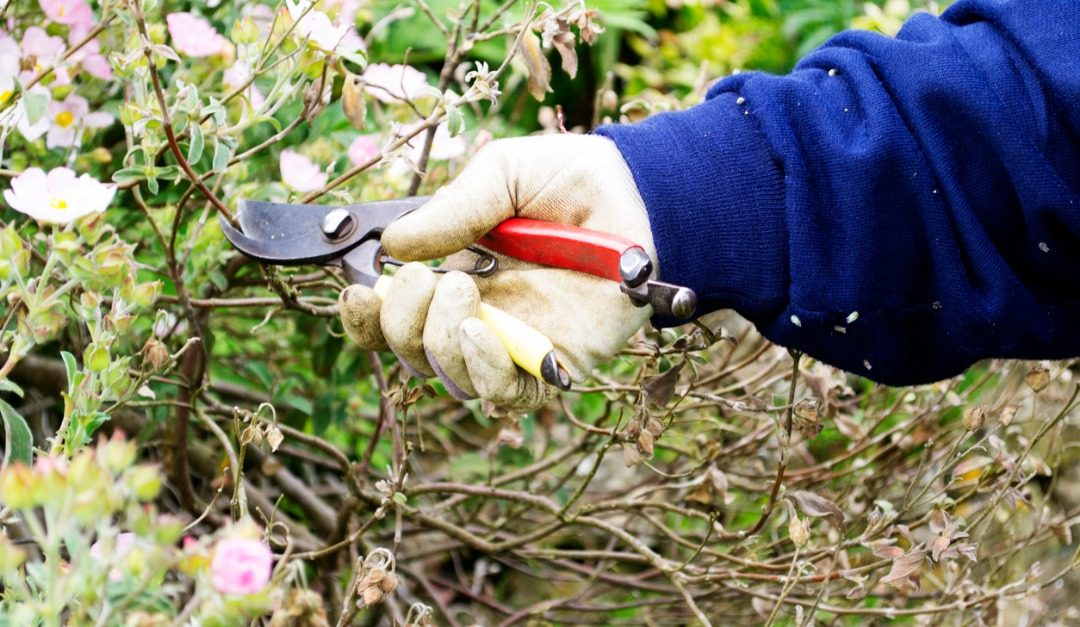 Winter Garden Tasks to Put on Your To-Do List