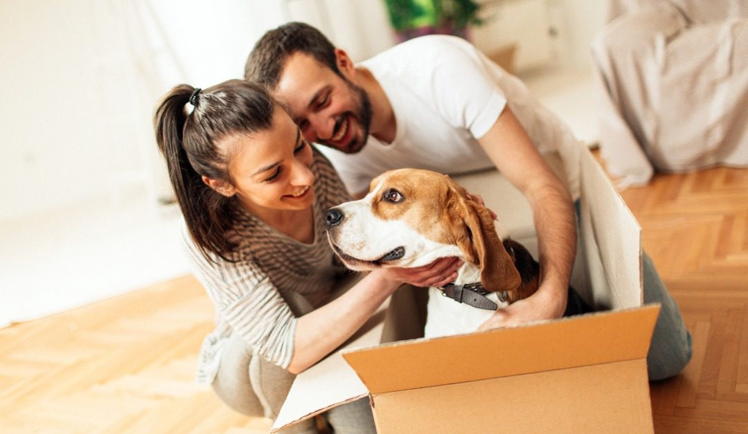 A Guide to Introducing Your Pet to Your New Home