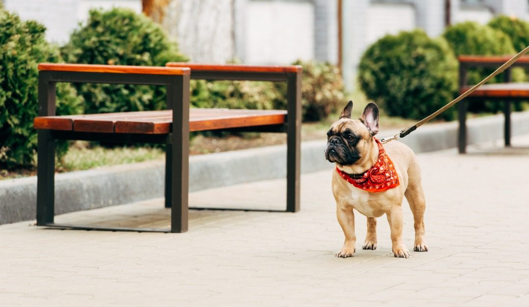 4 Adorable Dog Breeds That Are Suited for City Living