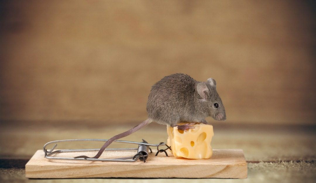 What to Do When You Find a Mouse in Your Apartment