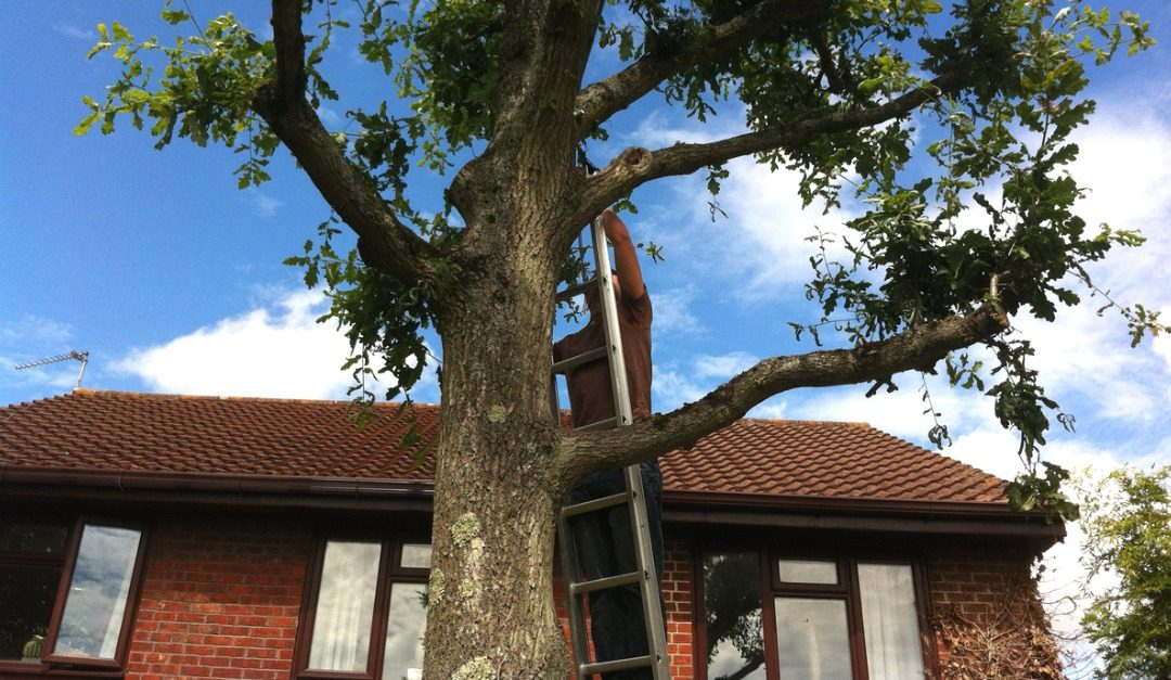 Problems That Can Result From Having Trees and Bushes Too Close to Your House