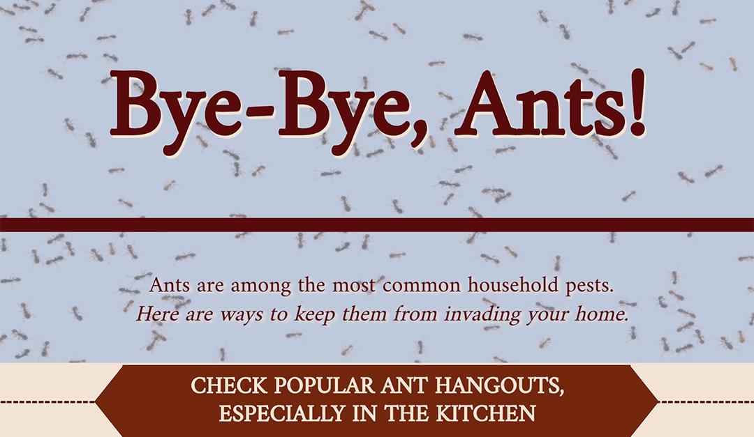 Bye-Bye, Ants!