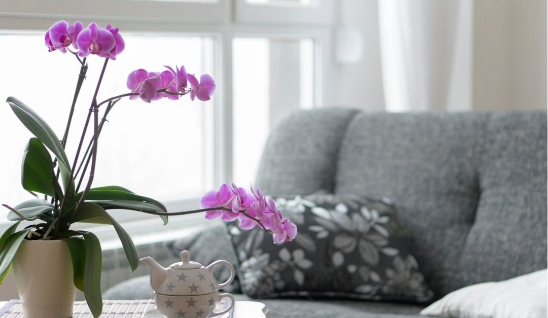 3 Easy Indoor Plants That Elevate Your Space