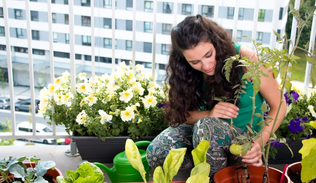 How to Create the Perfect Vegetable Garden in the City
