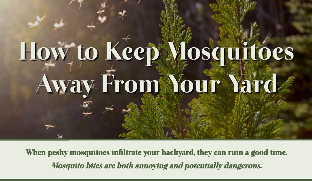How to Keep Mosquitoes Away From Your Yard — RISMedia