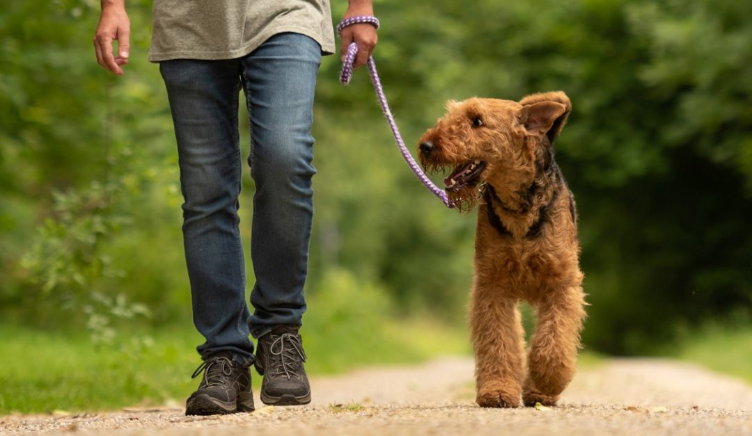 Thoughts on Leadership: The Value of Pets
