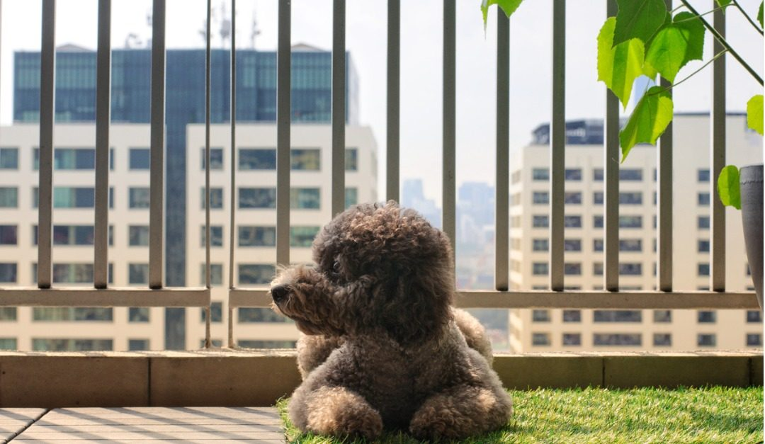 4 Features That Dog Owners Look For in the City