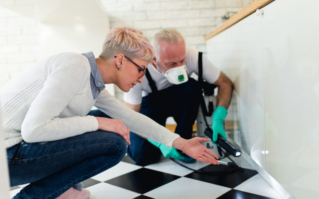 Pests Infested a Home You Want to Sell? How to Resolve the Issue