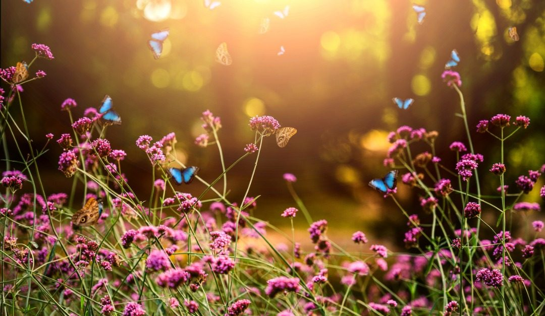 How to Design Your Own Butterfly Garden