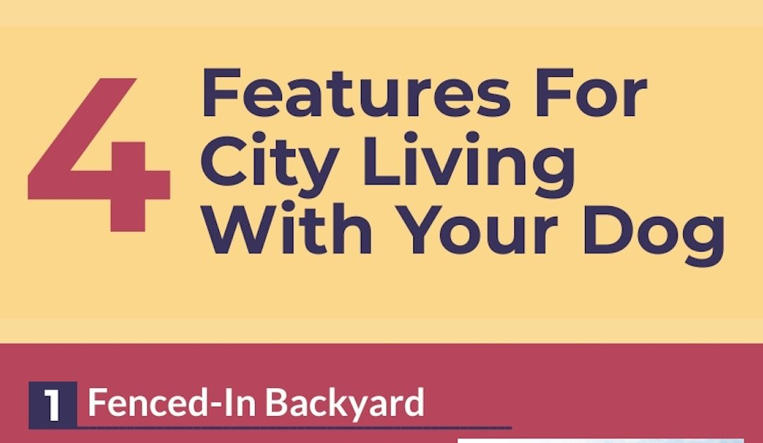 4 Features For City Living With Your Dog