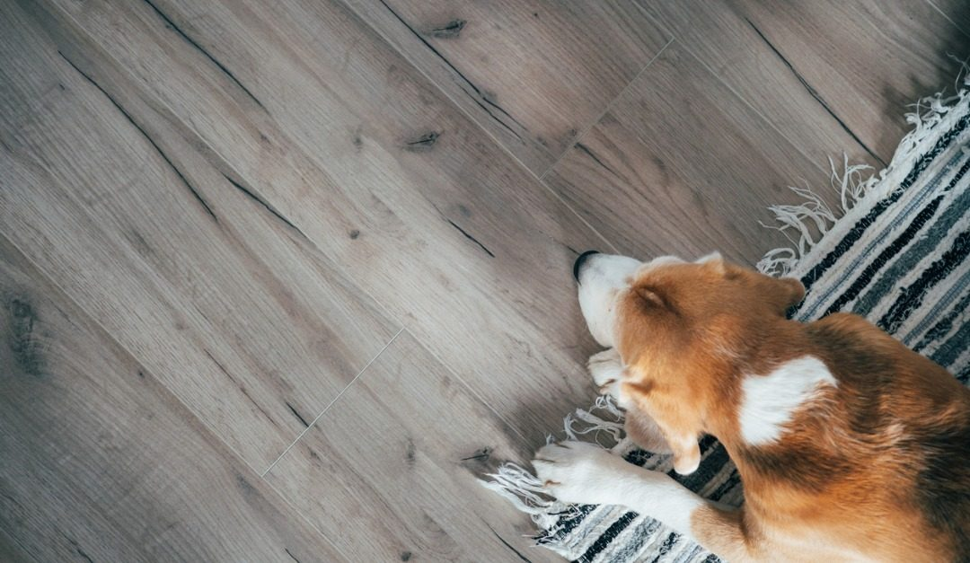 4 High-End Floor Options for Dog Owners
