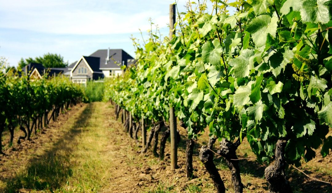 4 Things to Love About Living on a Vineyard