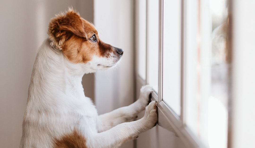 Co-Dependent Pets: How to Reduce Separation Anxiety When Owners Leave Home