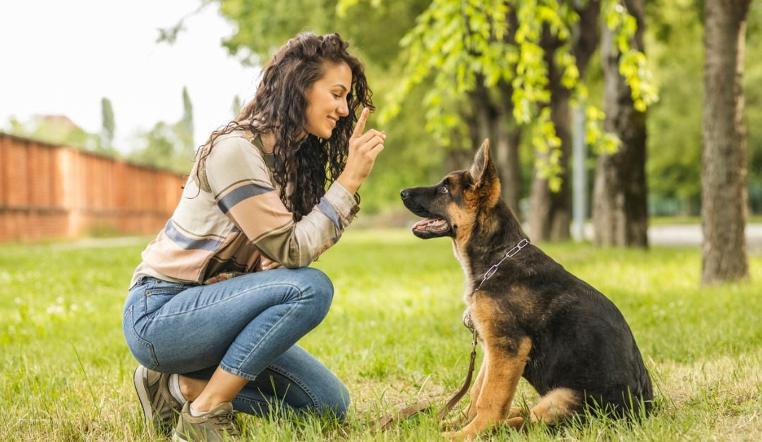 Five Dog Breeds That are Easy to Train