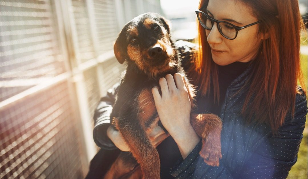 Rehoming Your Pet Humanely