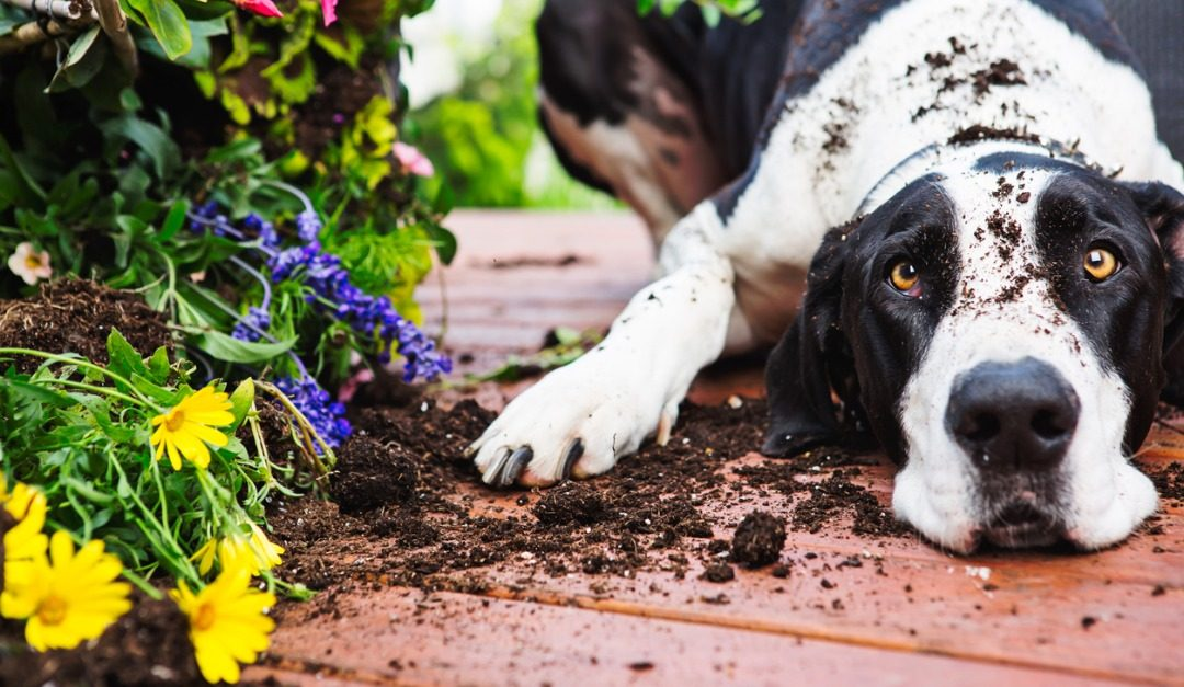 What to Do If Your Neighbor's Pet Keeps Coming Onto Your Property