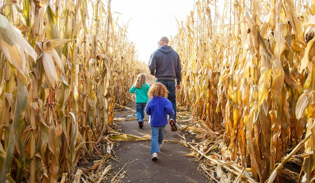4 Healthy and Simple Activities for Fall