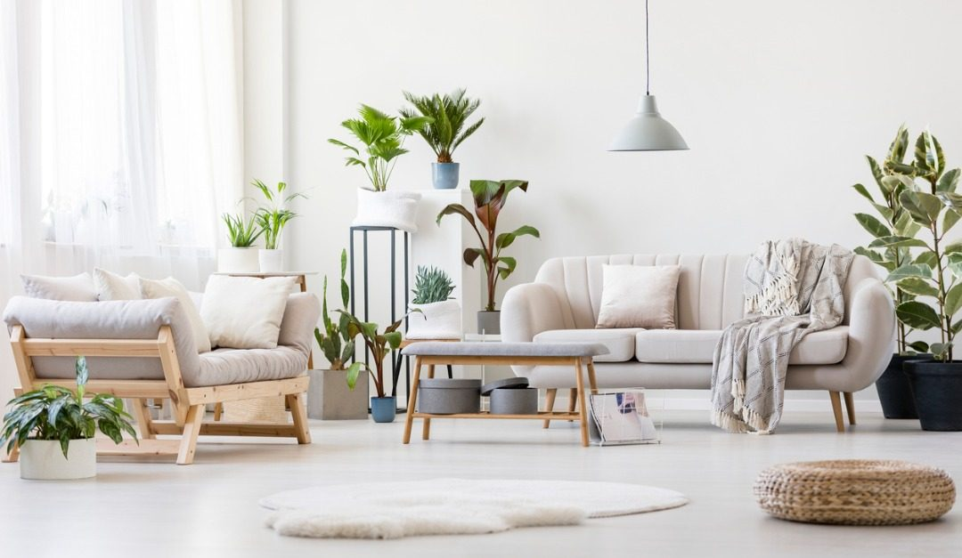 4 Best Indoor Trees for Your Home