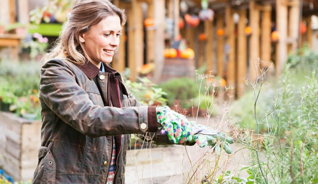 Cold-Weather Gardening Projects