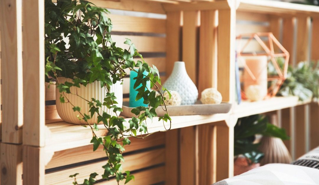 The Best Plants to Buy for Perfectly Styled Shelves