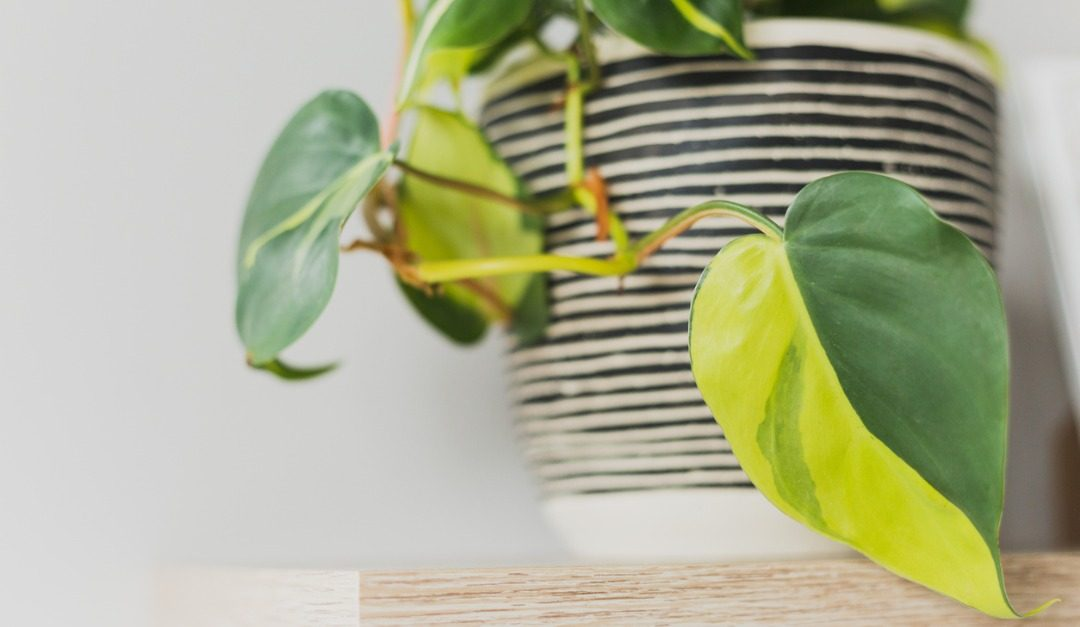 Short on Light? These 4 Houseplants Are For You