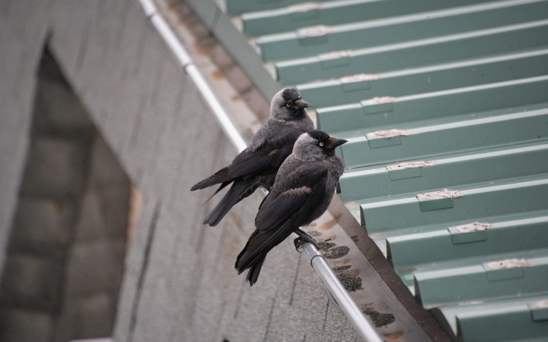 Animals and Other Pests That Can Quickly Ruin Your Roof