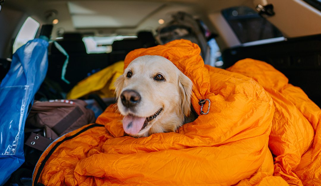 Family Travel Five: Planning the Perfect Pet-Friendly Trip