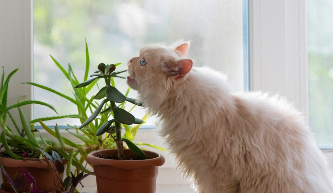 5 Common Houseplants That Are Toxic to Pets