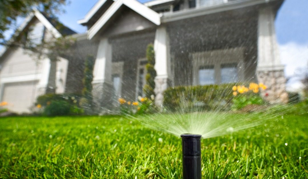 How To Make Your Lawn More Eco-Friendly