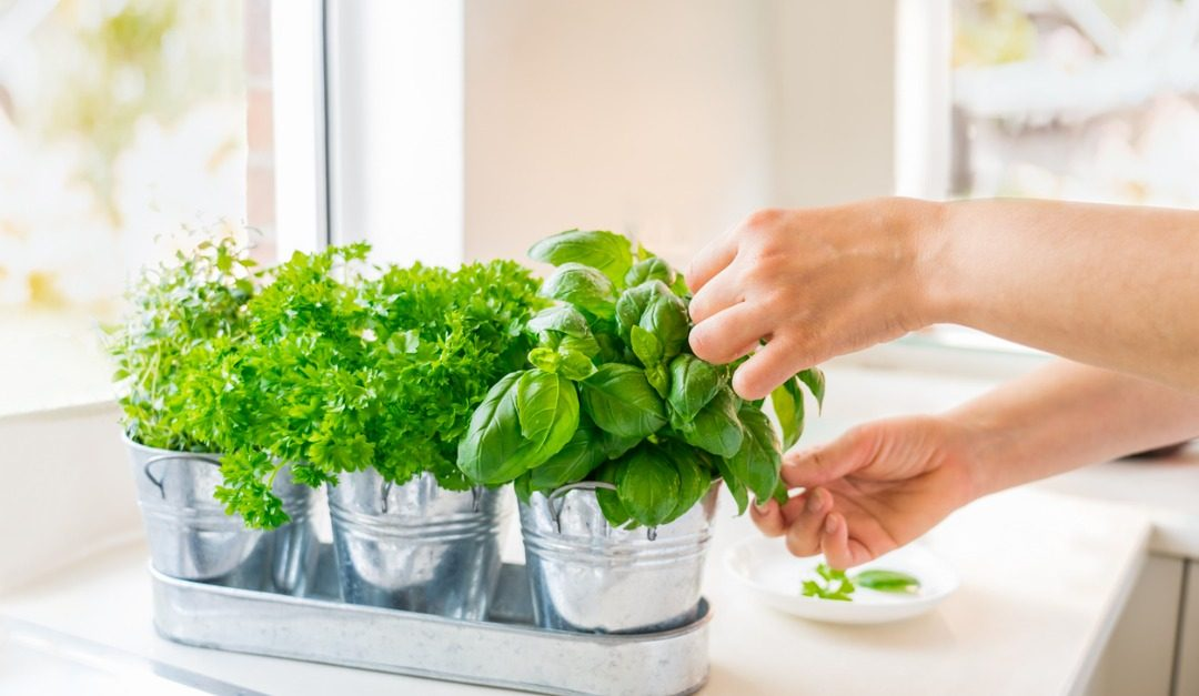 4 Tips to Make Your Kitchen More Eco-Friendly