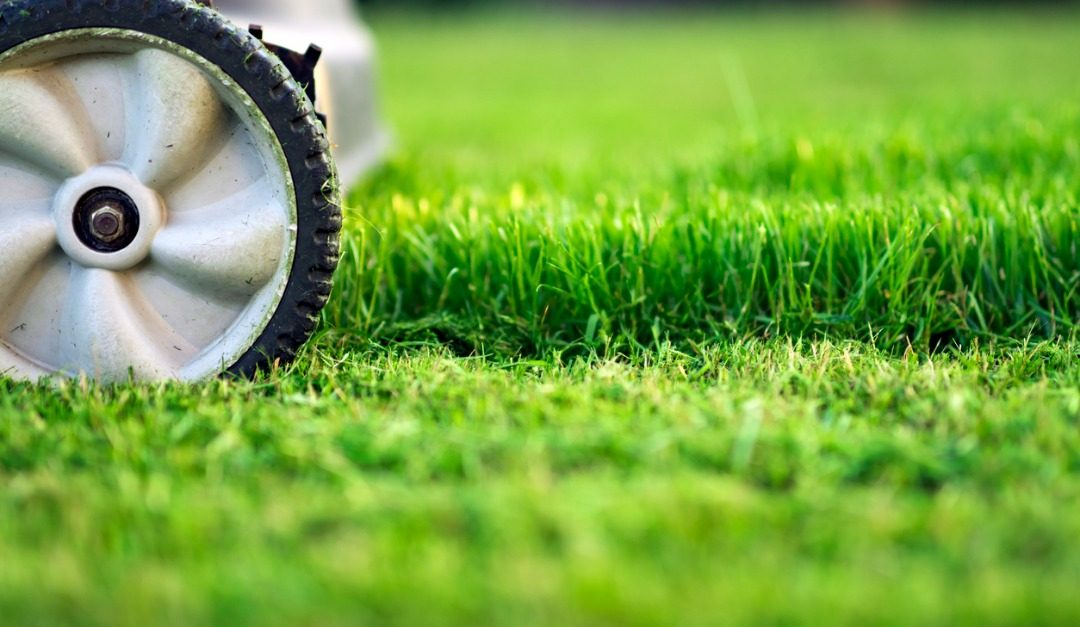 5 Lawn Care Myths That Have Been Debunked